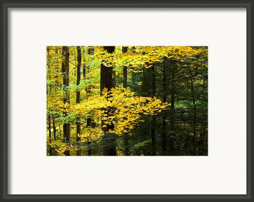Getting Ready Framed Print By Rich Franco