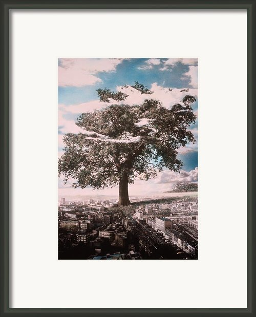 Giant Tree In City Framed Print By Hag