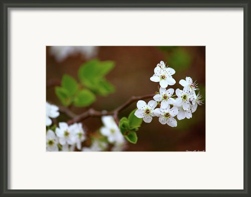 Gift Of Light Framed Print By Karen M Scovill