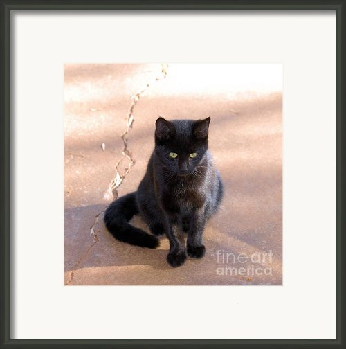 Ginger Framed Print By Cheryl Poland