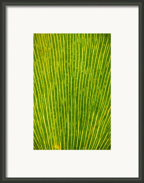Ginko Tree Leaf Framed Print By Steve Gadomski
