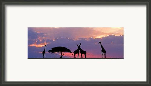 Giraffe On Horizon Framed Print By Tim Booth
