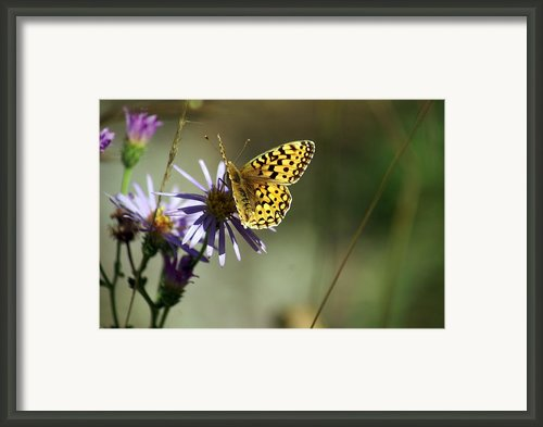 Glacier Butterfly Framed Print By Marty Koch