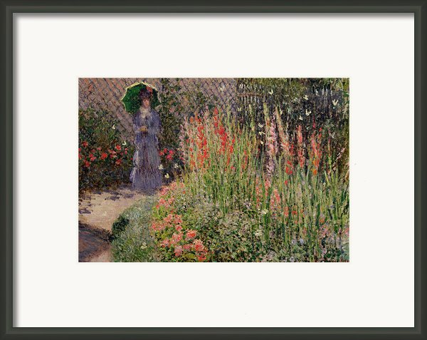 Gladioli Framed Print By Claude Monet