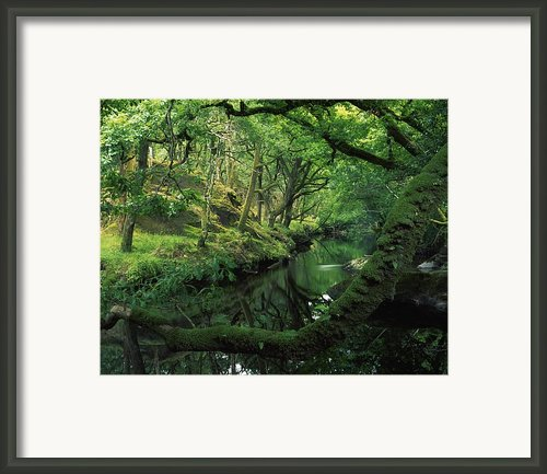 Glengarriff River, County Cork, Ireland Framed Print By Richard Cummins
