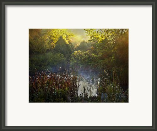 Glorious Morning Framed Print By Robin Webster