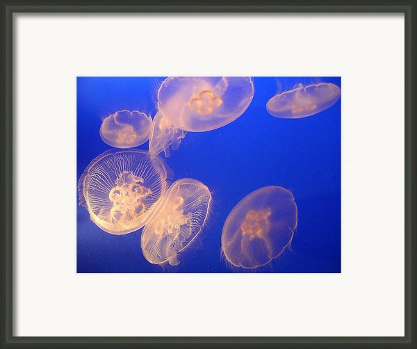 Glowing Jellyfish Framed Print By Karen Nicholson