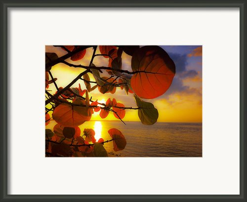 Glowing Red Ii Framed Print By Stephen Anderson