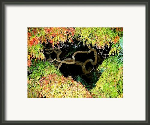 Gnarly Autumn Beauty Framed Print By Will Borden
