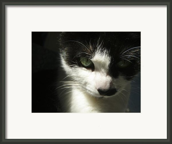 Go Ahead Make My Day  Framed Print By Kristine Nora