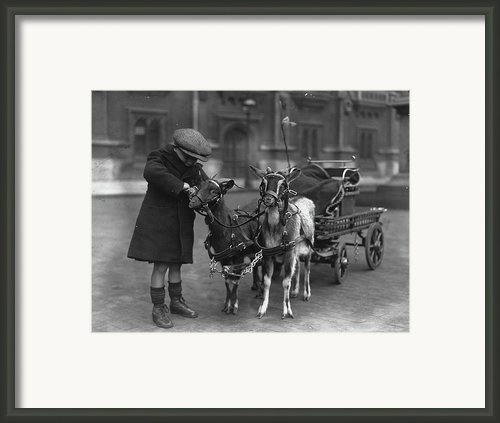 Goat Cart Framed Print By Fox Photos