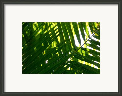 Going Green Framed Print By Brad Scott