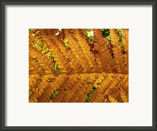 Gold Leaf Framed Print By William Fields