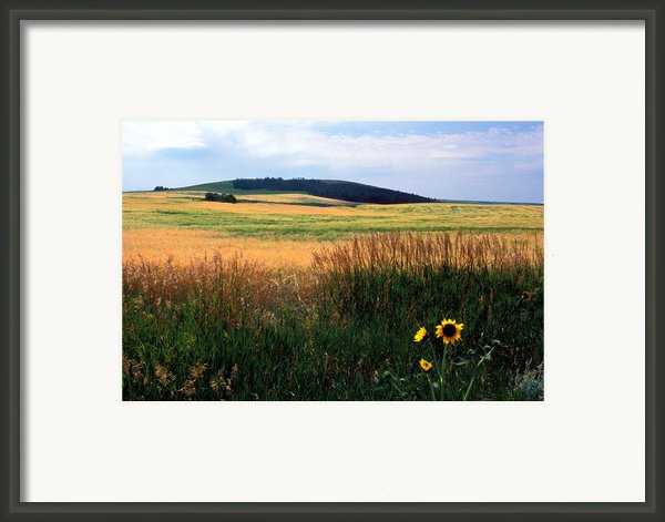 Golden Fields Forever Framed Print By Kathy Yates