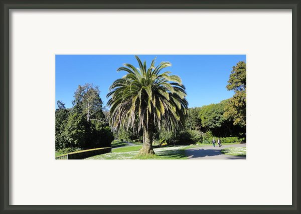 Golden Gate Park  Framed Print By Eliot Jenkins