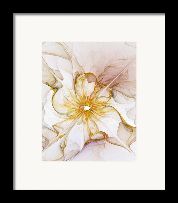Golden Glow Framed Print By Amanda Moore