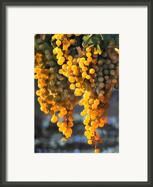 Golden Grapes Framed Print By Elaine Plesser