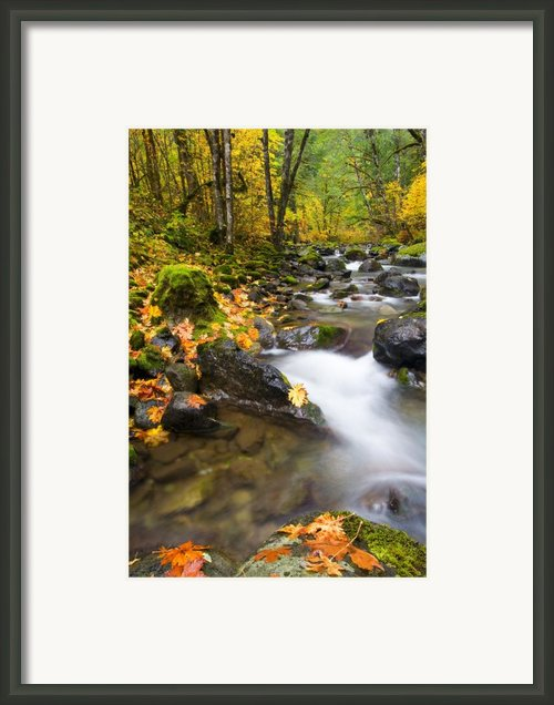 Golden Grove Framed Print By Mike  Dawson