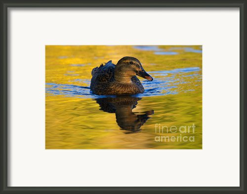 Golden Hen Framed Print By Mike  Dawson