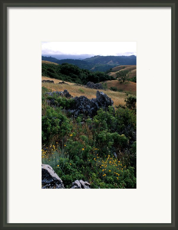 Golden Hills Of Summer Framed Print By Kathy Yates