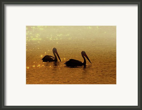 Golden Morning Framed Print By Mike  Dawson