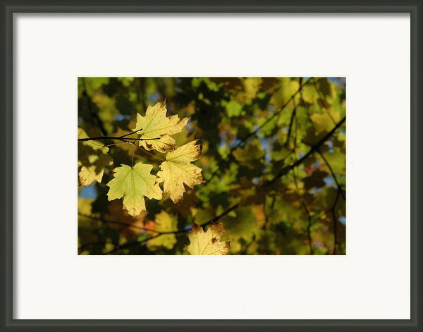 Golden Morning Framed Print By Trish Hale