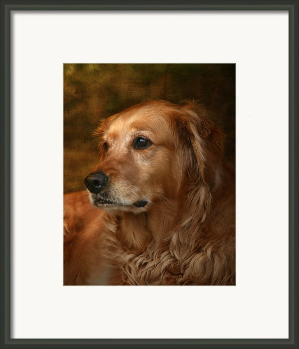 Golden Retriever Framed Print By Jan Piller