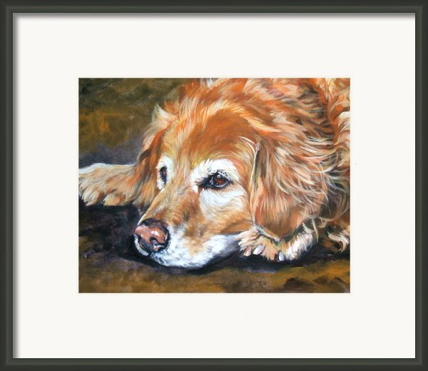 Golden Retriever Senior Framed Print By Lee Ann Shepard