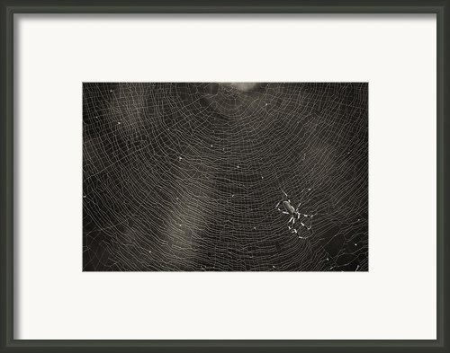Golden Silk Spider  Framed Print By Patrick M Lynch