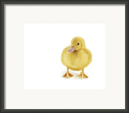 Golden Treasure Framed Print By Bob Nolin