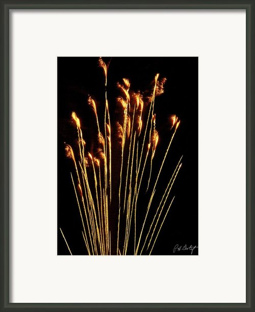Goldenrod Framed Print By Phill  Doherty