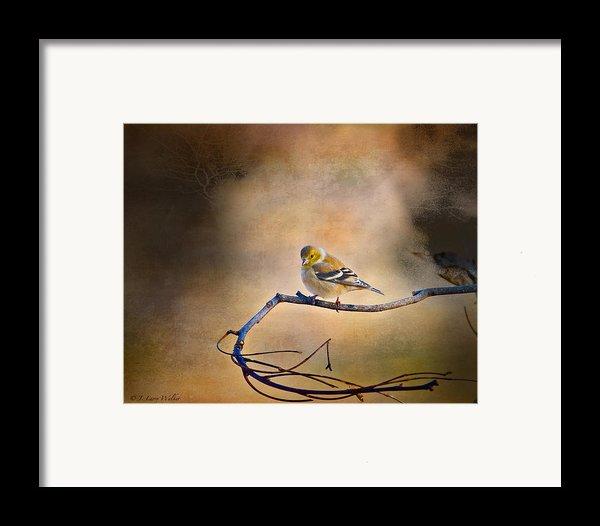 Goldfinch In Deep Thought Framed Print By J Larry Walker