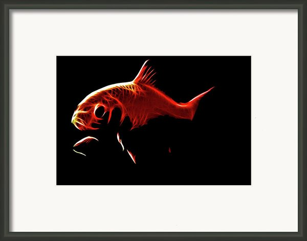 Goldfish 1 Framed Print By Tilly Williams