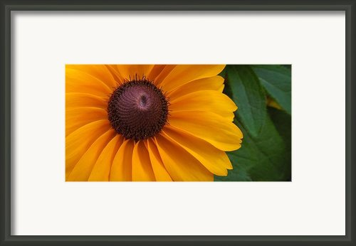 Goldilocks  Flower Framed Print By Chad And Stacey Hall