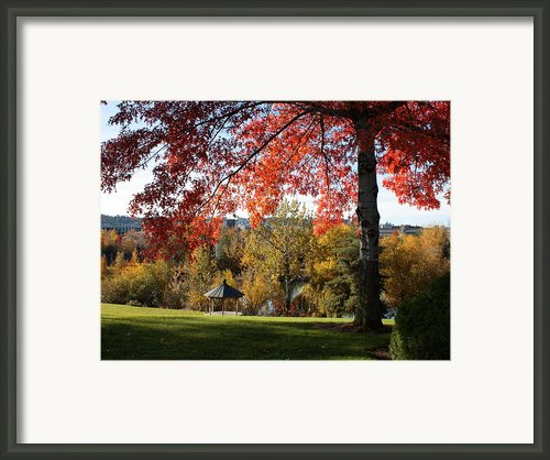 Gonzaga With Autumn Tree Canopy Framed Print By Carol Groenen