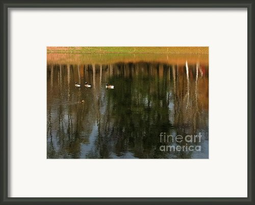Goose Goose Duck Goose Framed Print By Trish Hale