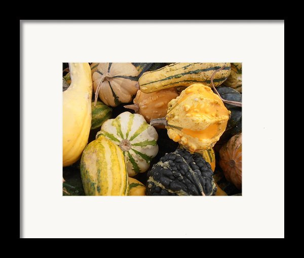 Gourds Framed Print By Kimberly Perry