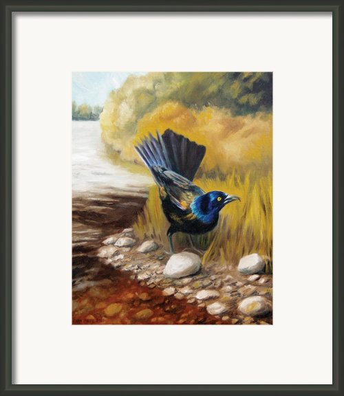 Grackle Framed Print By Cara Zietz