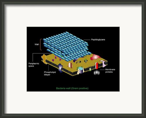 Gram Positive Cell Wall, Artwork Framed Print By Francis Leroy, Biocosmos