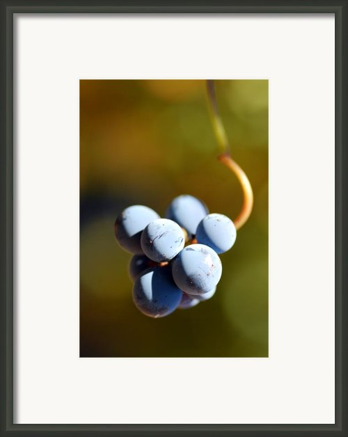 Grape Framed Print By Catherine Lau