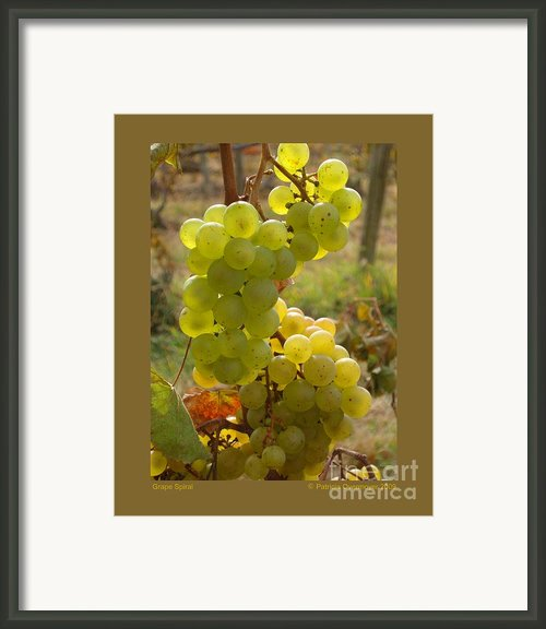 Grape Spiral Framed Print By Patricia Overmoyer