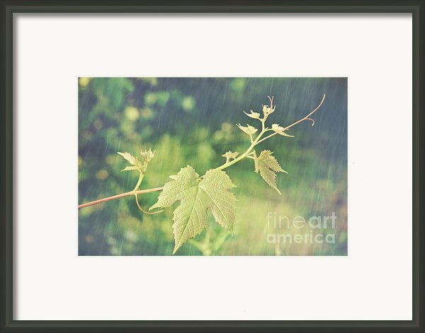 Grape Vine Against Summer Background Framed Print By Sandra Cunningham