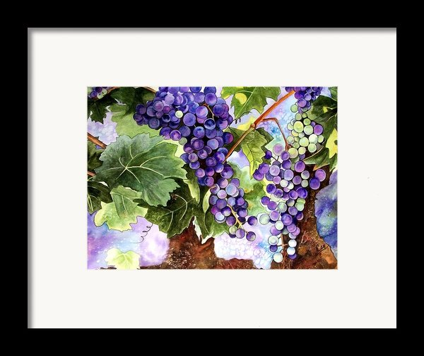Grape Vines Framed Print By Karen Casciani
