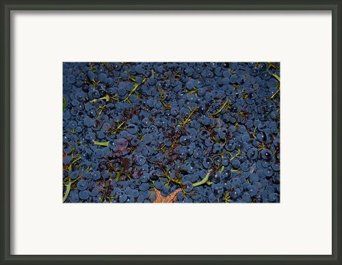 Grapes Framed Print By Barbara Walsh
