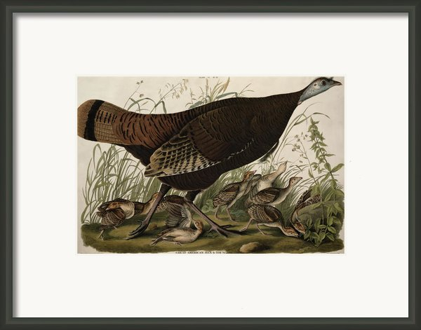 Great American Hen And Young Framed Print By John James Audubon
