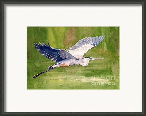 Great Blue Heron Framed Print By Pauline Ross