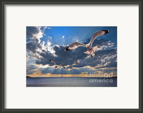 Greek Gulls With Sunbeams Framed Print By Meirion Matthias