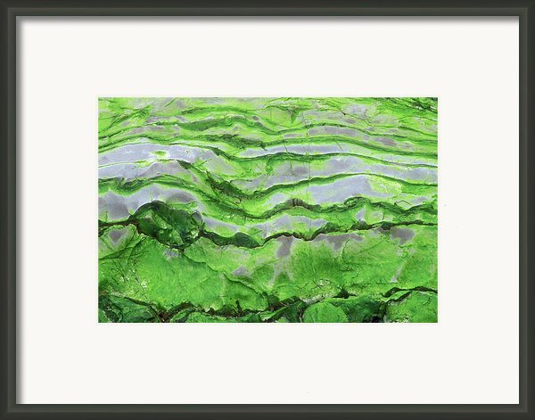 Green Algae Patterns On Exposed Rock At Low Tide, Gros Morne National Park, Ontario, Canada Framed Print By Altrendo Nature