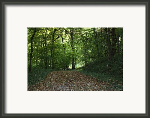 Green Cemetery Road Framed Print By James Collier