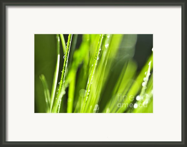 Green Dewy Grass  Framed Print By Elena Elisseeva
